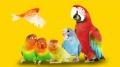 Accessori per uccelli