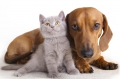 Giochi per Cane e Gatto
