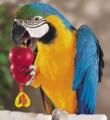 Giochi per pappagalli
