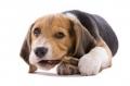 Masticazione Cane e Gatto