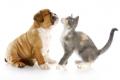 linea Cane e Gatto